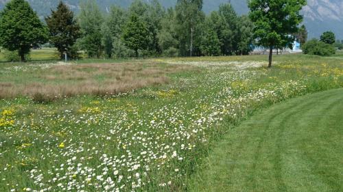 Golfclub Gams Werdenberg 17